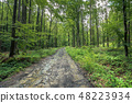 old dirt road through forest 48223934