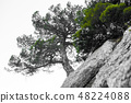 Lonely tree in the rocky mountains, as a symbol of endurance and vitality in difficult living 48224088