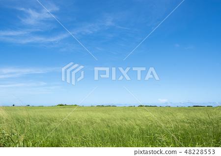 초원과 푸른 하늘 48228553