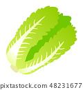中國的白菜 48231677