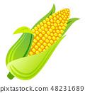 玉米 48231689