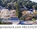 Nara Hase-dera Cherry Blossoms ของฤดูใบไม้ผลิการท่องเที่ยวนารา 48232429