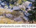 Nara Hase-dera Cherry Blossoms ของฤดูใบไม้ผลิการท่องเที่ยวนารา 48232434
