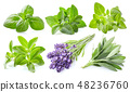 Collection of fresh herbs on white background 48236760