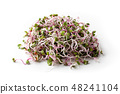 Pink radish sprouts on a white background 48241104