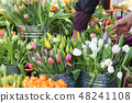 Colorful tulips at the farmers market in spring 48241108