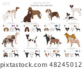 Hunting dogs vector collection isolated on white 48245012
