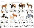 Hunting dogs vector collection isolated on white 48245013