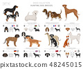 Hunting dogs vector collection isolated on white 48245015