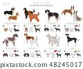 狗 狗狗 繁殖 48245017