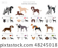 Hunting dogs vector collection isolated on white 48245018