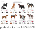 Hunting dogs vector collection isolated on white 48245020