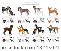 Hunting dogs vector collection isolated on white 48245021