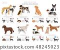 狗 狗狗 繁殖 48245023