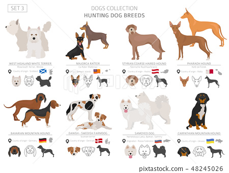 Hunting dogs vector collection isolated on white 48245026