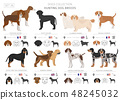 Hunting dogs vector collection isolated on white 48245032