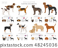 Hunting dogs vector collection isolated on white 48245036