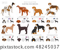 Hunting dogs vector collection isolated on white 48245037