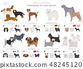 Companion and miniature toy dogs collection 48245120