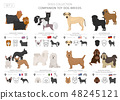 Companion and miniature toy dogs collection 48245121