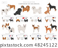 Companion and miniature toy dogs collection 48245122