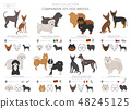Companion and miniature toy dogs collection 48245125