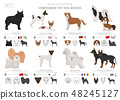 Companion and miniature toy dogs collection 48245127