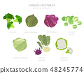 Kohlrabi, cabbage turnip  graphic template. 48245774