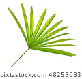 lady palm leaf, bamboo palm or ground isolated 48258683
