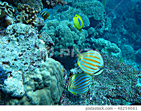海底裡珊瑚礁與魚 48259081