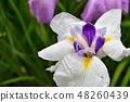 꽃 창포 꽃 창포 꽃 창포 48260439