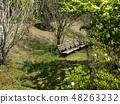 初夏的陽光和長凳 48263232