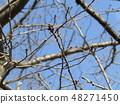 산 벚나무 아직도 딱딱한 뇌 48271450