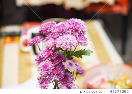 紫色杭菊花 48272006