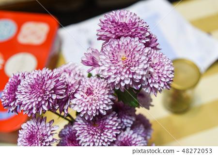 紫色杭菊花 48272053