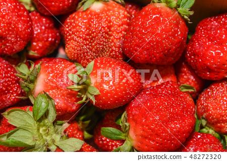 台灣大湖草莓季 48272320