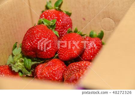 台灣大湖草莓季 48272326