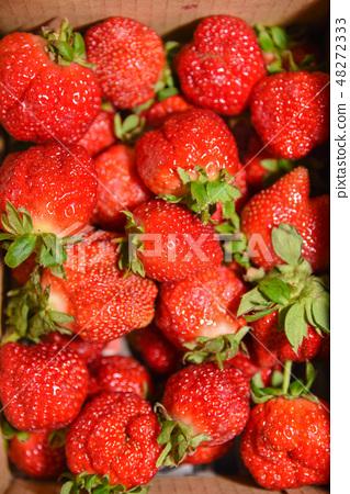 台灣大湖草莓季 48272333