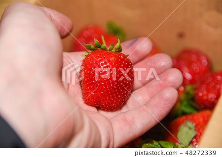 台灣大湖草莓季 48272339