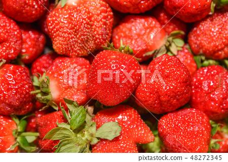 台灣大湖草莓季 48272345