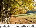 Trees in autumn season background. 48278508