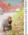 猴猴蘑菇农场台湾台中春 48278685