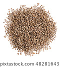 A heap of quality seeds of parsley, for your beautiful garden. Can be used for create new unique 48281643