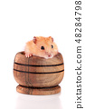 Little funny hamster in a wooden bowl isolated on white background 48284798