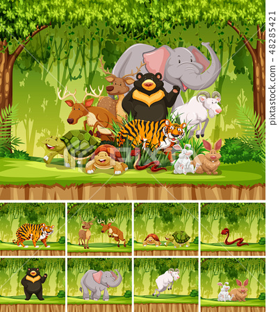 Group of wild animal in jungle 48285421