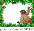 A sloth in nature frame 48285452
