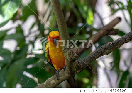 多彩的鸚鵡 48291064