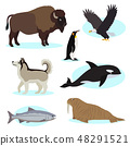 Set of cute wild animals icon for design and decoration 48291521