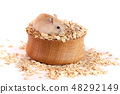 oat flakes in a wooden bowl with a hamster isolated on white background 48292149