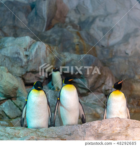 企鵝 48292685
